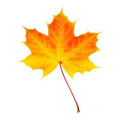 Verfärbtes Herbstblatt