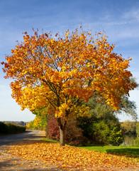 Bunte Herbstzeit
