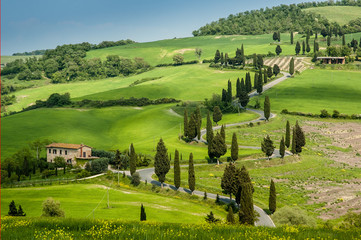 Road with curves and cypresses in Tuscany, Italy
