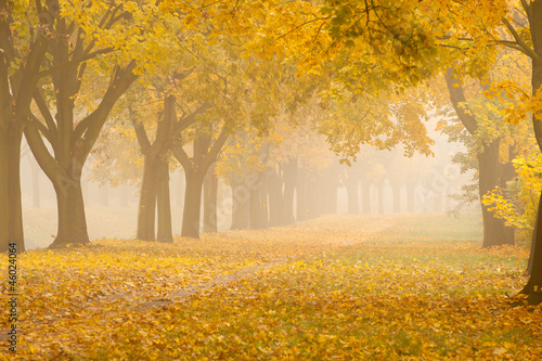 Fototapety, obrazy : romantic foggy autumn alley in a park