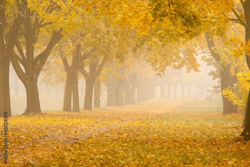 Zdjęcia na płótnie, fototapety na wymiar, obrazy na ścianę : romantic foggy autumn alley in a park