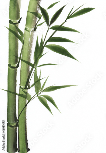 Watercolor painting of bamboo © Veronika
