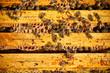 Obrazy na płótnie, fototapety, zdjęcia, fotoobrazy drukowane : Worker bees