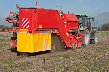 macchina scava patate in funzione