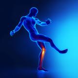 Knee joints sporstman anatomy
