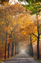 Allee im Herbst - avenue in fall 24
