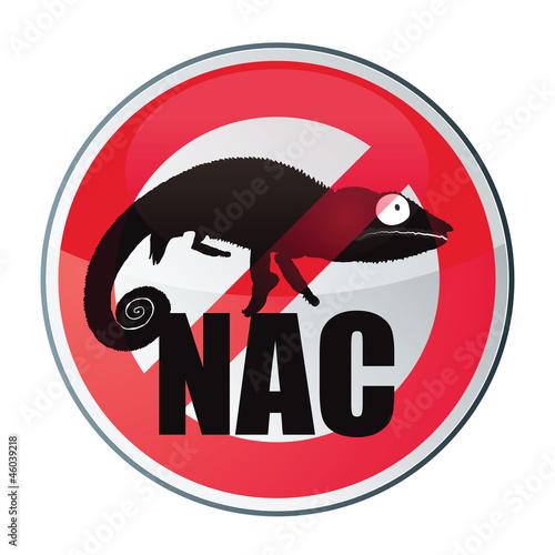 NAC : nouveaux animaux de compagnie