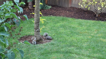 Two Squirrels Eating