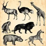 Animaux Sauvage d'Afrique