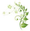 Frühling, frame, Blätter, Laub, Ranke, Grüntöne