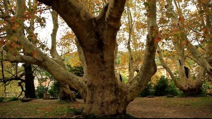 viel arbre....