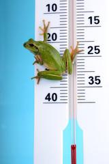 Météo - Rainette verte sur thermomètre 01