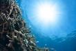 海中から見た太陽とサンゴと小魚