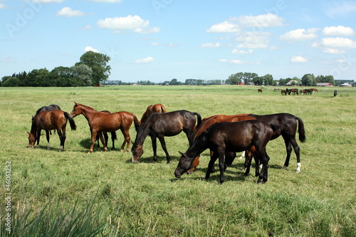 Group horses in the meadow