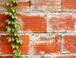 Creeper plant with brick wall background