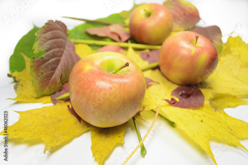 Apples on the fallen leaves waiting for when they eat