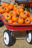 Mini Punpkins in Red Wagon
