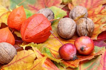 Herbstlaub mit Zieräpfeln und Nüssen