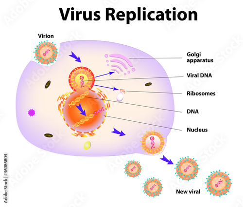 Virus Replication. Vector illustration