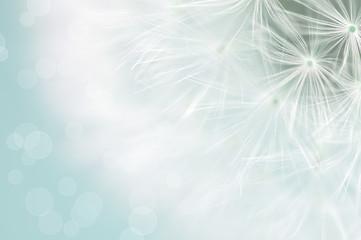 Dandelion © Andreja Donko