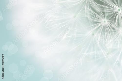 Keuken foto achterwand Paardebloem Dandelion