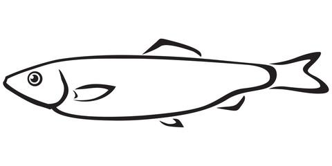 Sprat fish