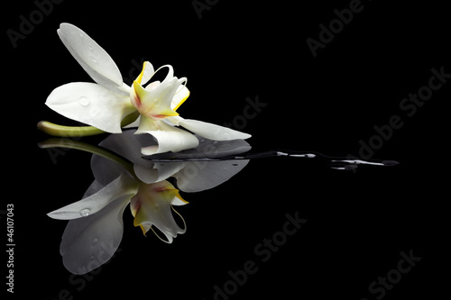 Orchid blossom reflection