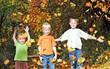 Kinderabenteuer Laubwald im Herbst