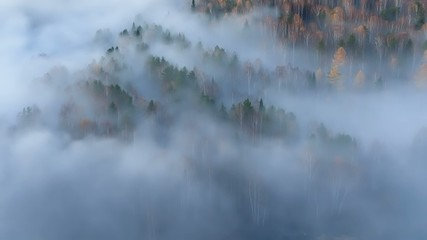 Autumn forest in the fog.