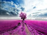 paisaje surreal con árbol en el camino