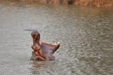 Fototapeta zwierzę - wodnych - Inne