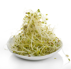 Fresh Alfalfa Sprouts