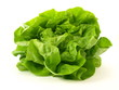 Lettuce, isolated