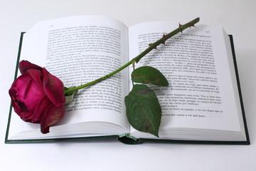 Libro abierto, rosa roja con espinas
