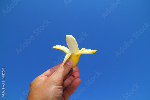 Baby banana fruit over blue sky background.