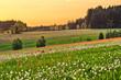 Spring flowered meadow