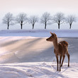 doe and snowy landscape