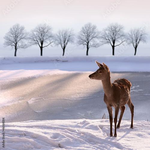 Fototapeta rząd - lód - Dziki Ssak