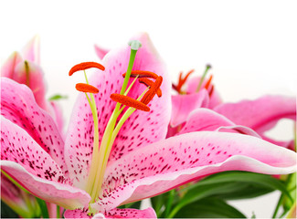 Beautiful Lily Flowers Bunch Blossom