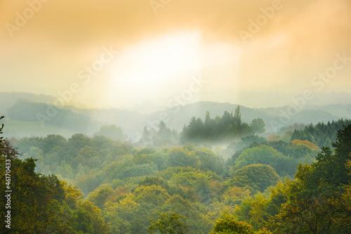 Fototapeten,wald,märchen,märchenlandschaft,nebel