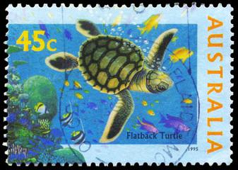 AUSTRALIA - CIRCA 1995 Flatback Turtle
