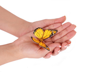 yellow butterfly on female hands isolated on white
