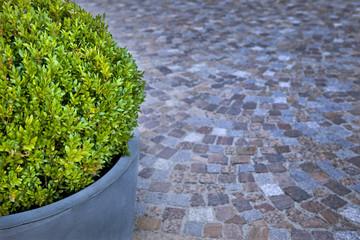 Terrasse, buis, jardin, plante, décoration, parvis, pot