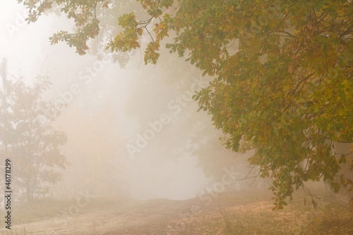 Foto op Canvas Bos in mist Autumn mist
