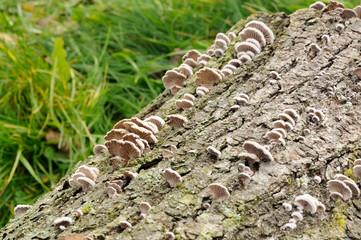 Fungi on Tree Stump