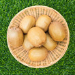 Kiwis in Basket on Grass