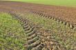 champs de céréles traversé par les traces d'un tracteur