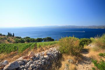 Murvica (Bol - isola di Brac - Croazia)