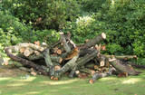 A Rough Pile of Recently Cut Down Tree Branches.