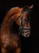 Fototapeten,haustier,pferd,portrait,pferdesport